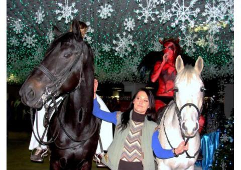 Лошади на Ваш праздник.