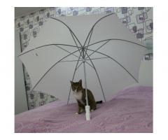 Белый свадебный зонт